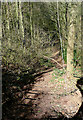 SO8281 : Steep footpath through Kingsford Forest Park, Worcestershire by Roger  Kidd