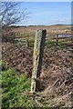 TM4975 : Old Gatepost falling to bits by Ashley Dace