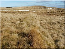 NS4875 : Remains of a boundary by Lairich Rig