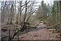 TQ6637 : Footpath through Brown's Wood by N Chadwick