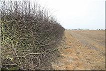 SJ6341 : Wilkesley Winter Fields by Peter Styles