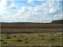 SK6053 : Farmland off Blidworth Lane by JThomas