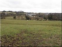C1708 : Curragh Townland by Kenneth  Allen