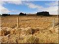 C0701 : Drumnabarragh Townland by Kenneth  Allen