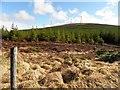 C0703 : Laganimmagh Townland by Kenneth  Allen