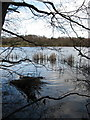 SJ6170 : The upper reaches of Petty Pool Lake by Dr Duncan Pepper