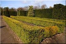 SJ7243 : Hedges at Bridgemere Garden World by Steve Daniels