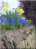 SW8060 : Spring's arrived! by Rod Allday