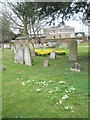SU9974 : Spring in the churchyard at Old Windsor (2) by Basher Eyre