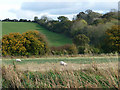 SP4407 : Fields beside the Thames by Chris Gunns