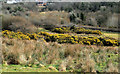 J3370 : The Lagan Meadows walk, Belfast (19) by Albert Bridge