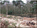 SZ0195 : Pond, Canford Heath by Lorraine and Keith Bowdler