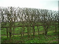 SE8244 : Hedgerow beside the A1079 towards York by JThomas