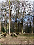 SO5206 : Picnic area, Manor Wood, The Narth by Ruth Sharville