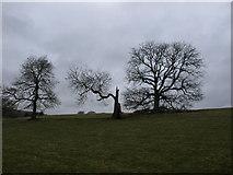 SK1971 : Trees near Little Longstone by Andrew Abbott