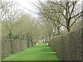 TQ1772 : Ham House: the Wilderness by Stephen Craven
