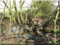 TM2492 : Pond beside footpath to Spring Wood by Evelyn Simak