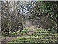 NY9864 : Riverbank footpath west of West Green (4) by Mike Quinn