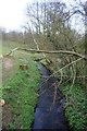 SJ6250 : Edleston Brook, south of Ravensmoor by Espresso Addict