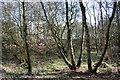 SJ6247 : Damp woodland at Sound Heath SSSI by Espresso Addict