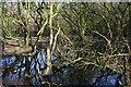 SJ6248 : Small mere in woodland at Sound Heath by Espresso Addict