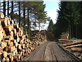 NX7755 : Timber Stacks by Iain Russell