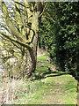 TM3899 : Path through Hall Carr by Evelyn Simak