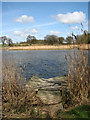 TM3899 : Fishing spot on the southern edge of Hardley Flood by Evelyn Simak