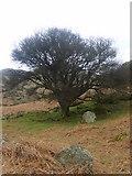 NY1618 : Apple Tree, Rannerdale by Michael Graham