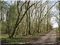 SP2272 : Ash woodland north of Nunley Pit by Robin Stott