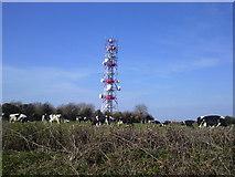 O1162 : Radio Mast, Co Meath by C O'Flanagan