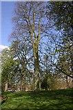 SP2865 : Priory Park, Warwick by David P Howard