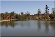 TL8425 : The Lake at Markshall by Peter French
