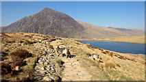 SH6459 : Mountain Goats at Llyn Idwal by Gary Rogers
