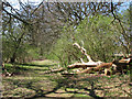 TF7915 : Remains of a felled tree beside the Nar Valley Way by Evelyn Simak