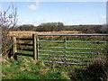 SN0026 : Path over Wallis Moor by ceridwen