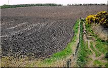 J5383 : Ploughed field, Groomsport by Albert Bridge