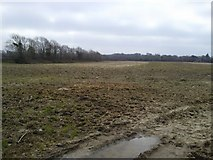 N9742 : Fieldscape, Cornelstown, Co Meath by C O'Flanagan