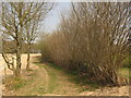 TQ6933 : Footpath to Chingley Manor by David Anstiss