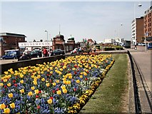 TQ7407 : Daffodils on Bexhill Seafront by Paul Gillett