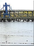 NZ2362 : Shelduck and the Dunston Coal Staiths by Andrew Curtis