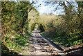 TQ5602 : The Wealdway near Jevington by N Chadwick