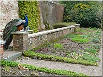 SS6140 : Herbaceous border in the walled garden, Arlington by Humphrey Bolton