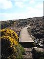 SW4840 : A boardwalk on the South West Coastal Path by Rod Allday