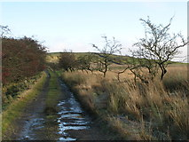 NY5675 : Track and pastures east of Crossgreens by Mike Quinn
