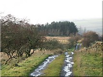 NY5675 : Track and pastures east of Crossgreens (2) by Mike Quinn
