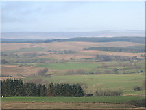 NY5676 : Pastures and plantation east of Park Head by Mike Quinn