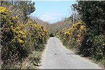 SW7642 : Minor road near Baldhu by Fred James