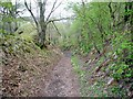NU0120 : Deep hollow-way on old road from Ingram to Ilderton by Andrew Curtis