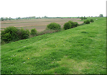 TF5902 : Cultivated fields between the River Great Ouse and the Cut-off channel by Evelyn Simak